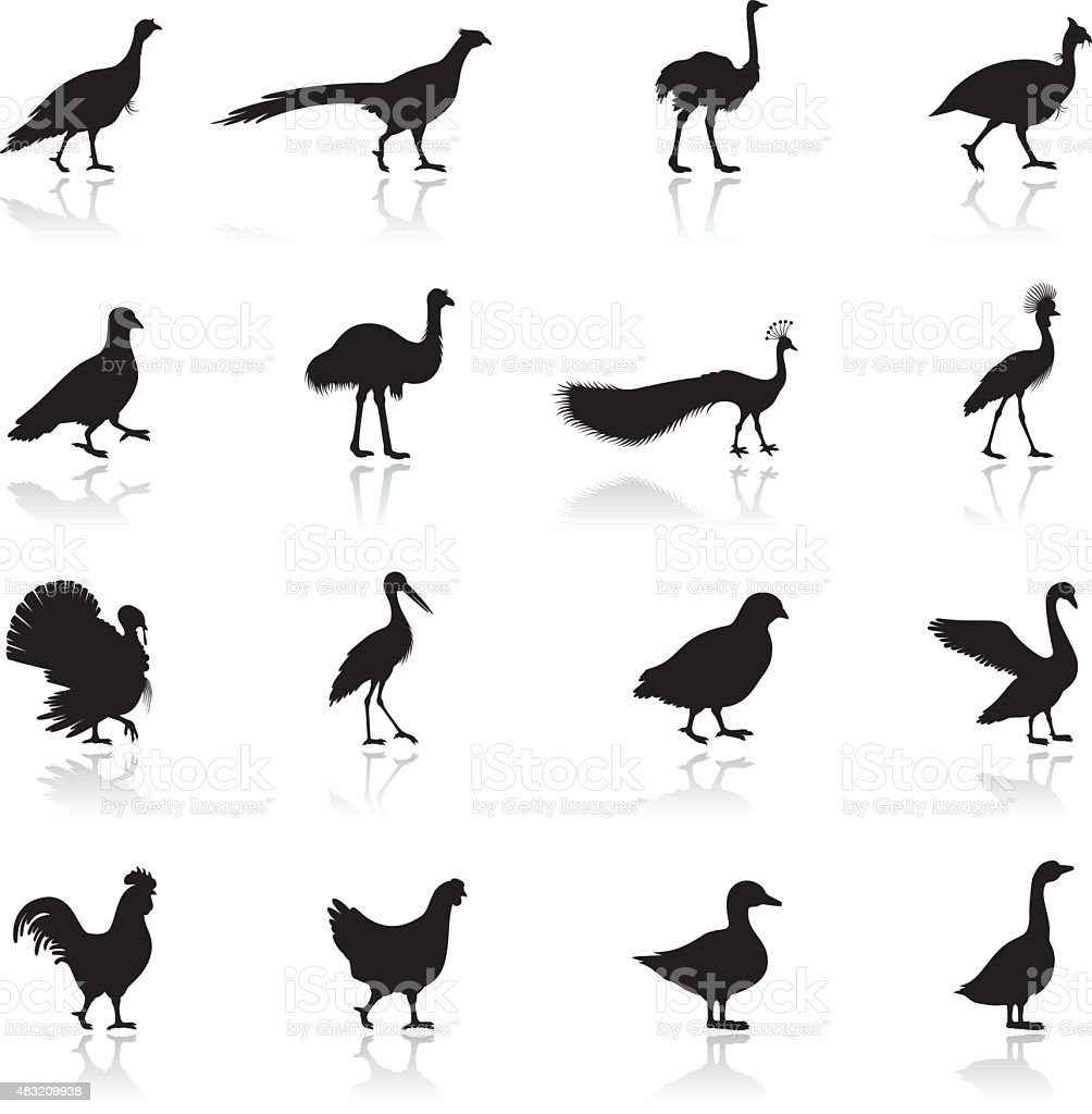 Poultry Silhouettes vector art illustration