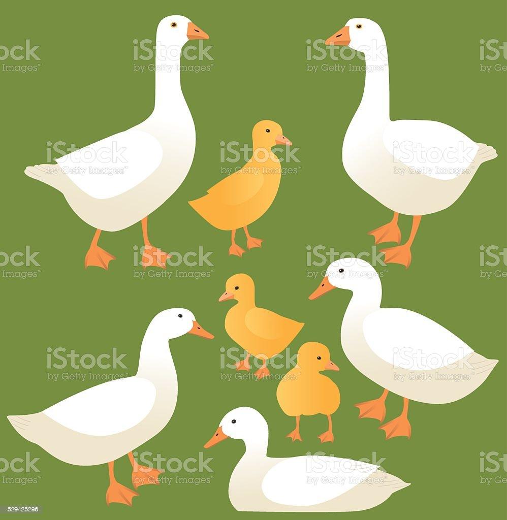 Poultry vector art illustration