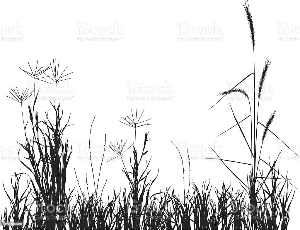 prairie grasses vector art illustration
