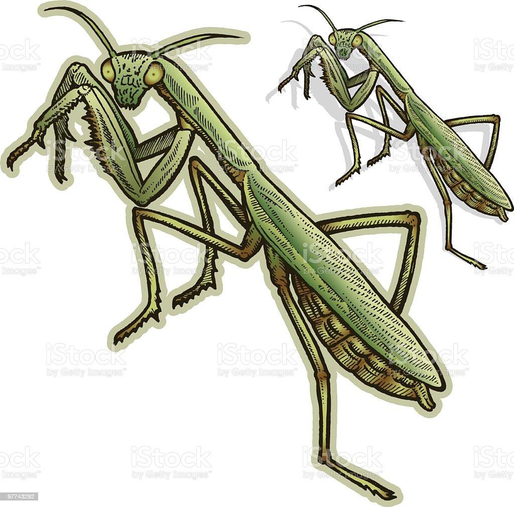 Praying Mantis royalty-free stock vector art