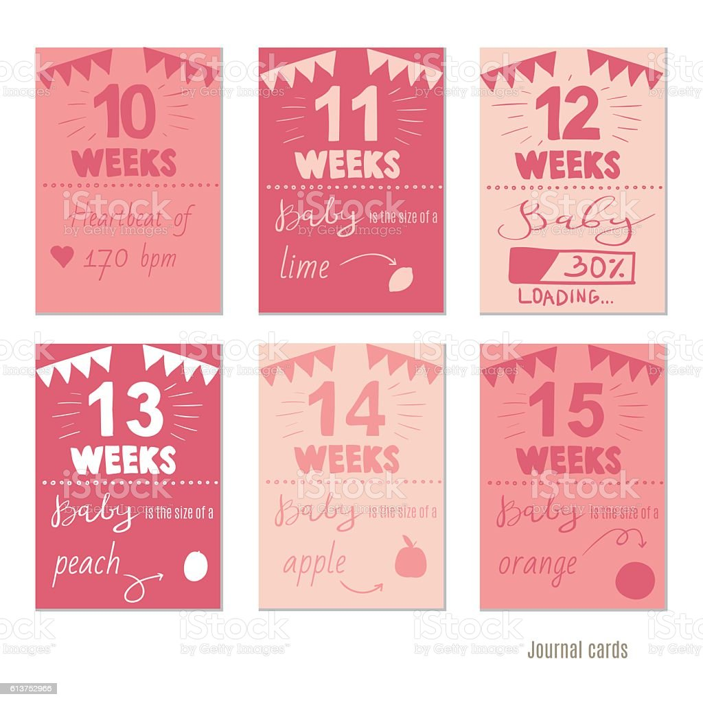 pregnancy 10-15 weeks  for journal cards, scrapbooking cards. vector art illustration
