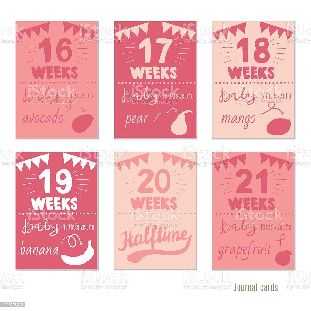 pregnancy 16-21 weeks  for journal cards, scrapbooking cards. vector art illustration