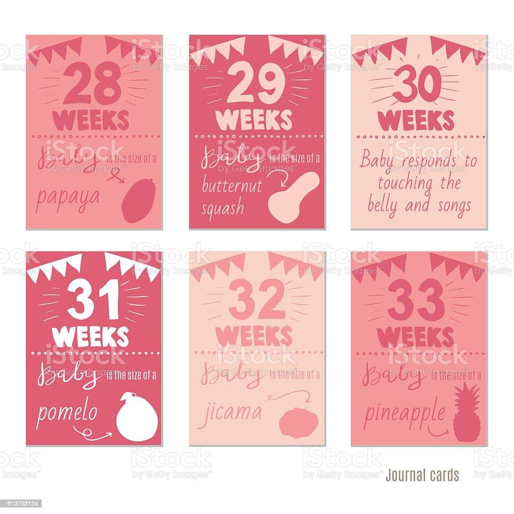 pregnancy 28-33 weeks  for journal cards, scrapbooking cards. vector art illustration