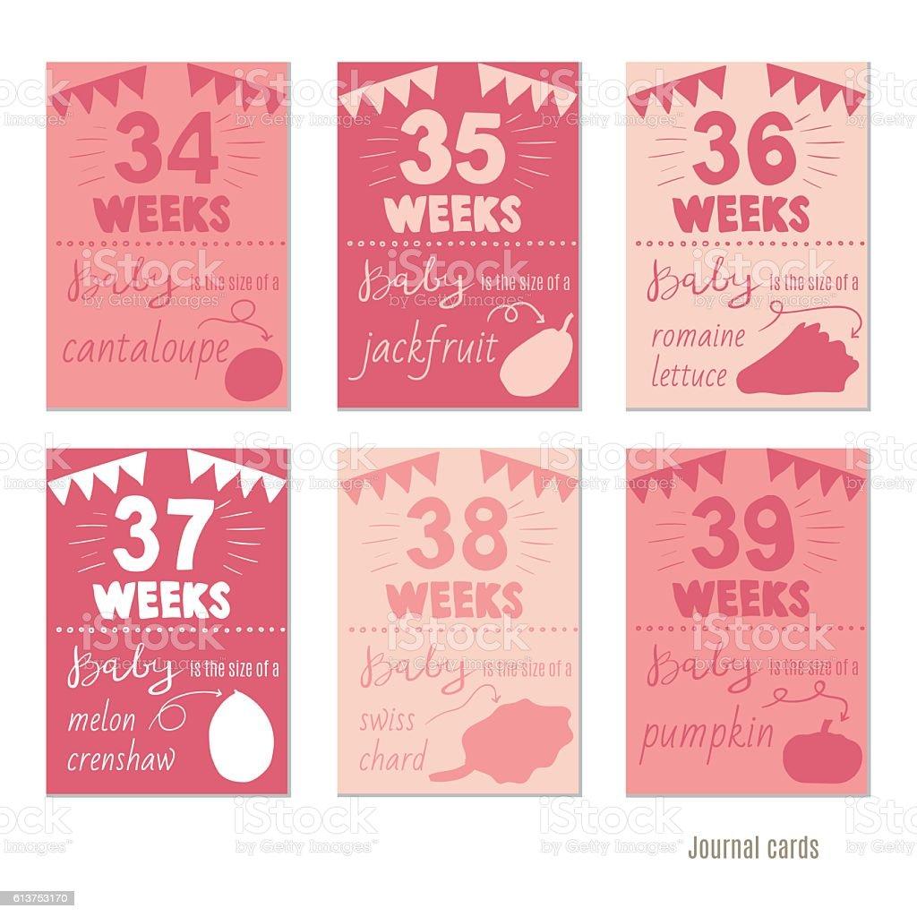pregnancy 34-39 weeks  for journal cards, scrapbooking cards. vector art illustration