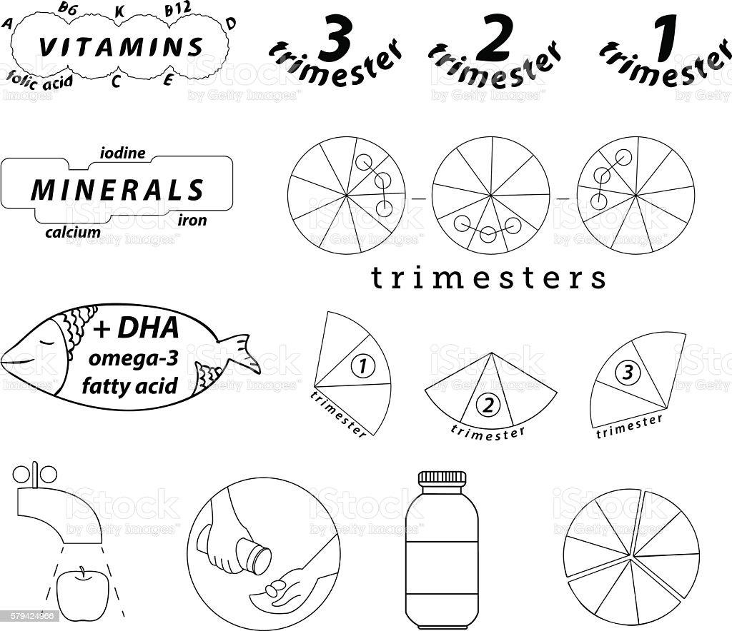 pregnancy food trimester linear icons vector art illustration