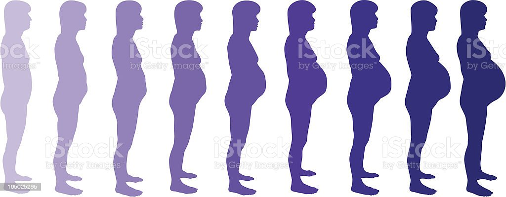 Pregnancy Month by Month (vector) vector art illustration