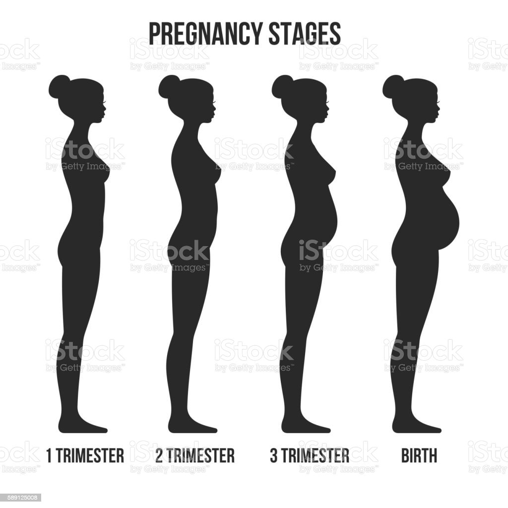 Pregnancy Stages and Birth Infographics Silhouette. Vector. vector art illustration