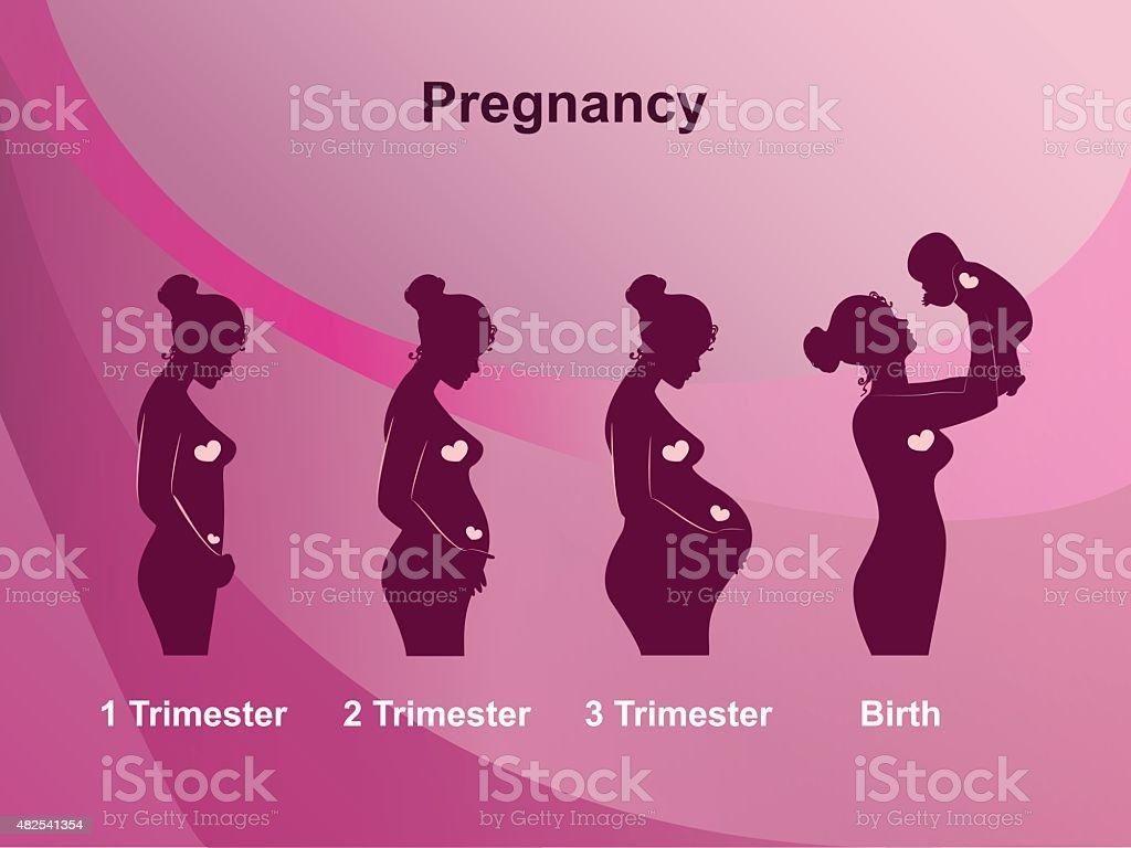 Pregnancy stages vector art illustration