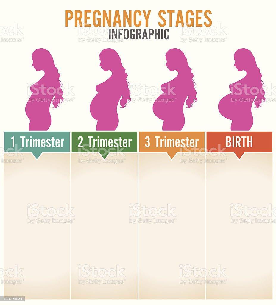 Pregnancy stages. Vector illustration. vector art illustration
