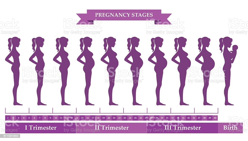 Pregnant female silhouettes vector art illustration