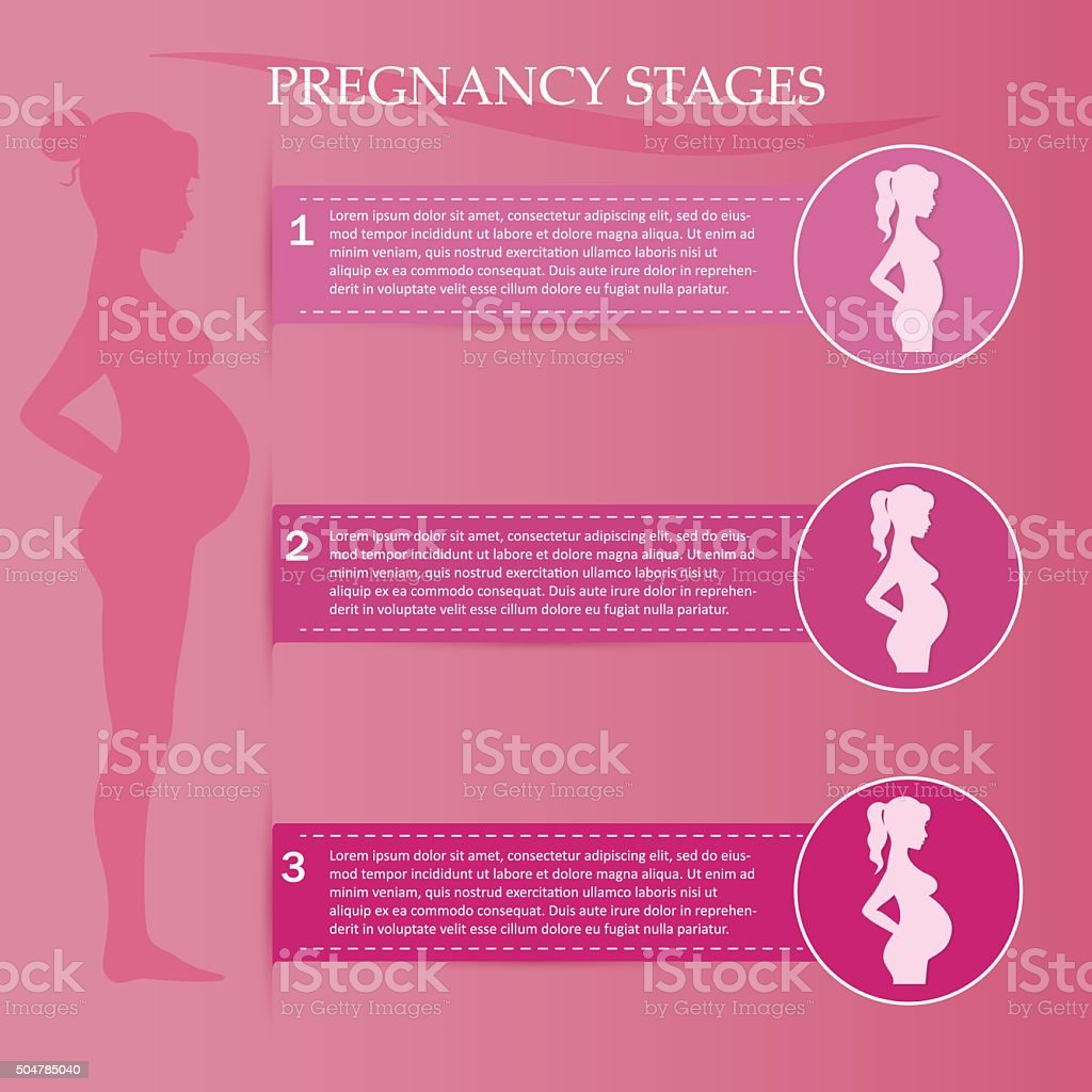 Pregnant woman - first, second and third trimester vector art illustration
