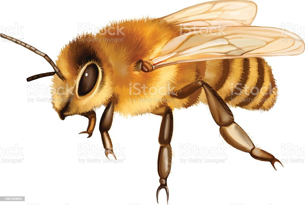 Pretty bee vector art illustration