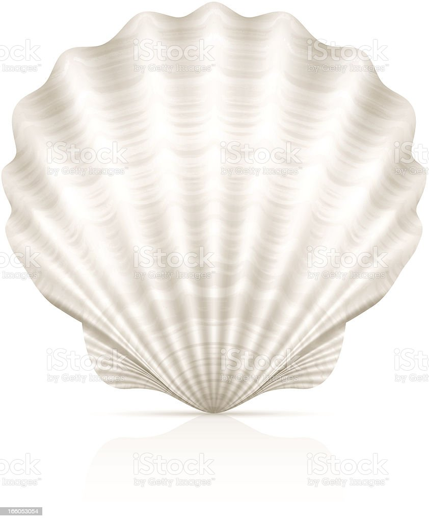 A pretty white seashell on a white background vector art illustration