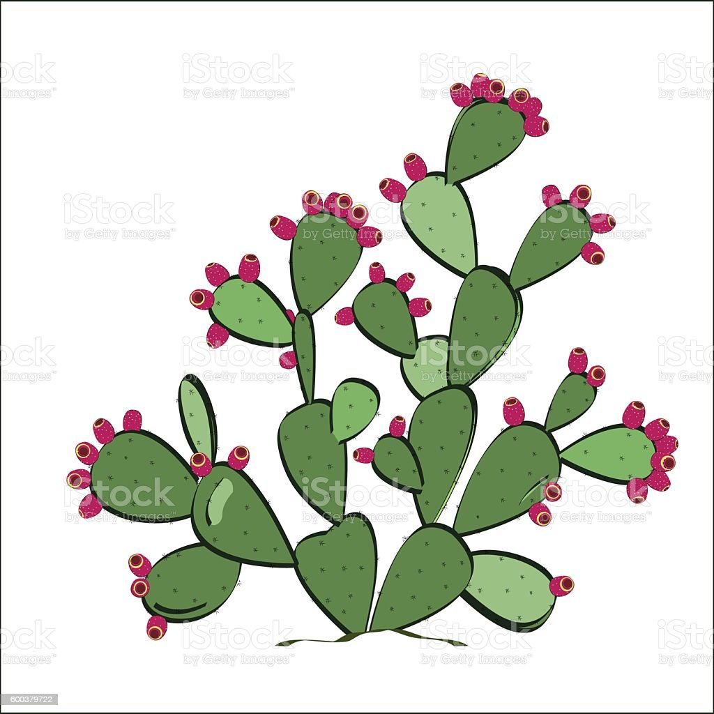 Prickly pear plant with fruits. Vector illustration vector art illustration