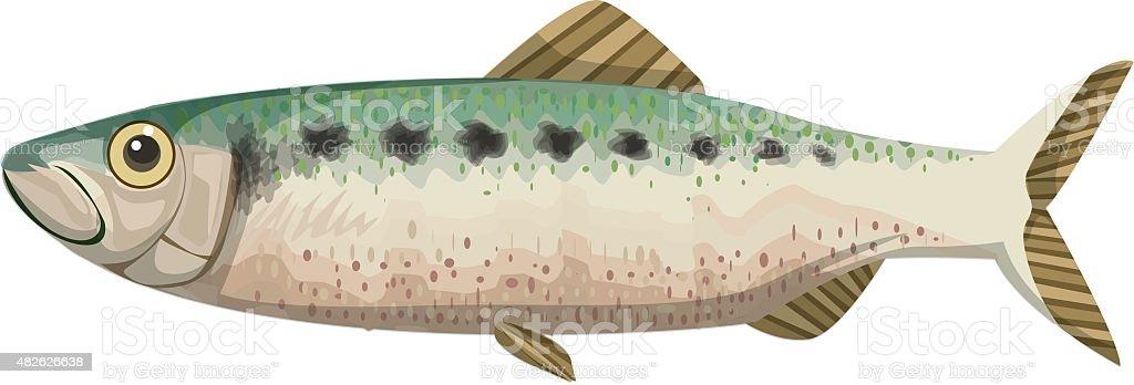 Printtwaite shad fish vector art illustration