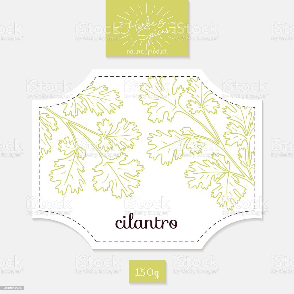 Product sticker with hand drawn cilantro or coriander leaves. Spicy vector art illustration