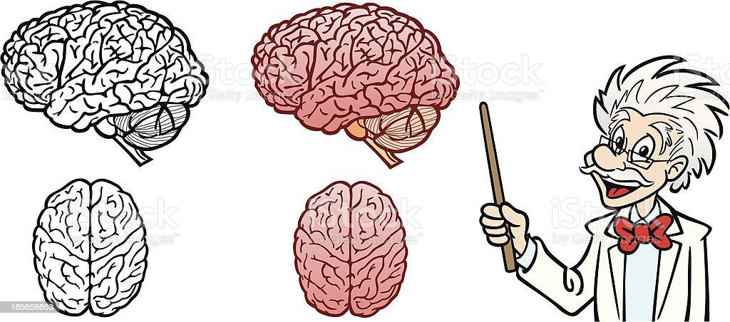 Professor With Human Brain royalty-free stock vector art