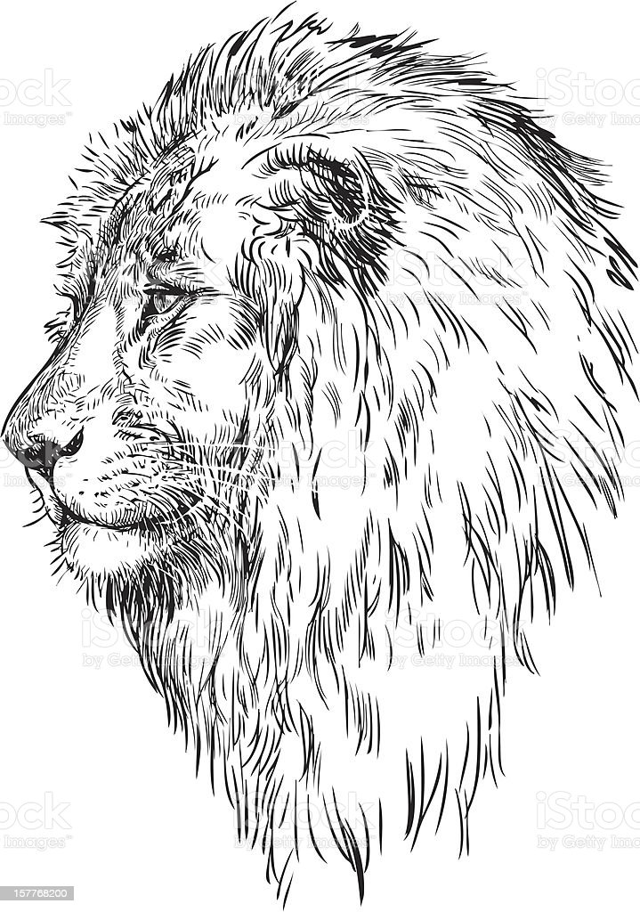 profile of a lion royalty-free stock vector art