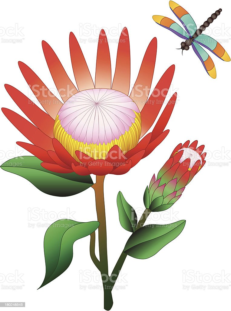 protea and dragonfly royalty-free stock vector art