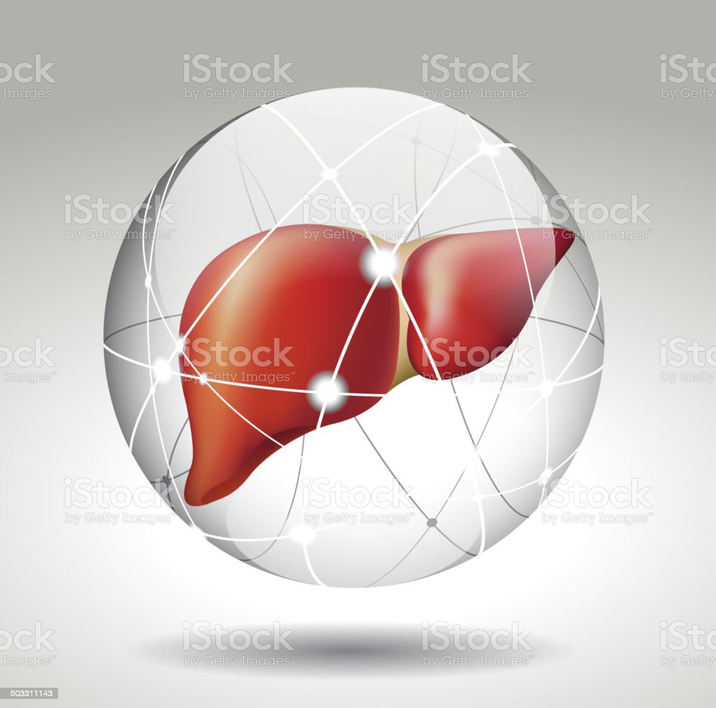 Protect the liver vector art illustration