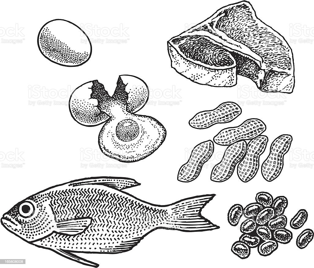Protein - Fish, Eggs, Meat, Nuts, Beans vector art illustration