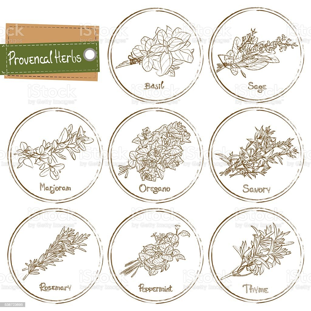 Provencal Herbs vector art illustration