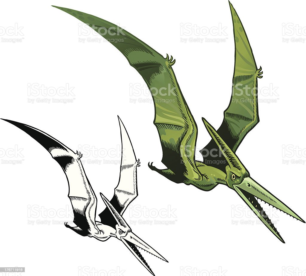 Pterodactyl in Color and Line royalty-free stock vector art