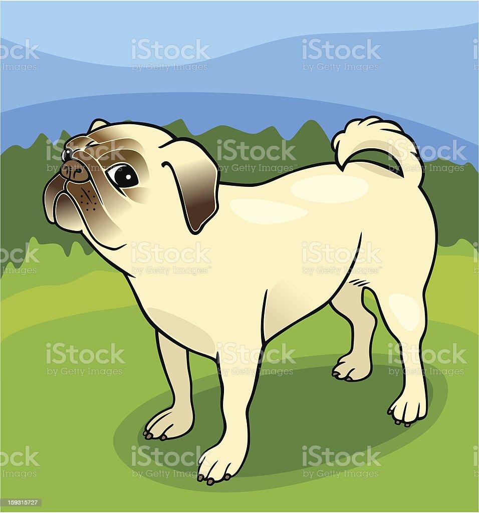 pug dog cartoon illustration royalty-free stock vector art