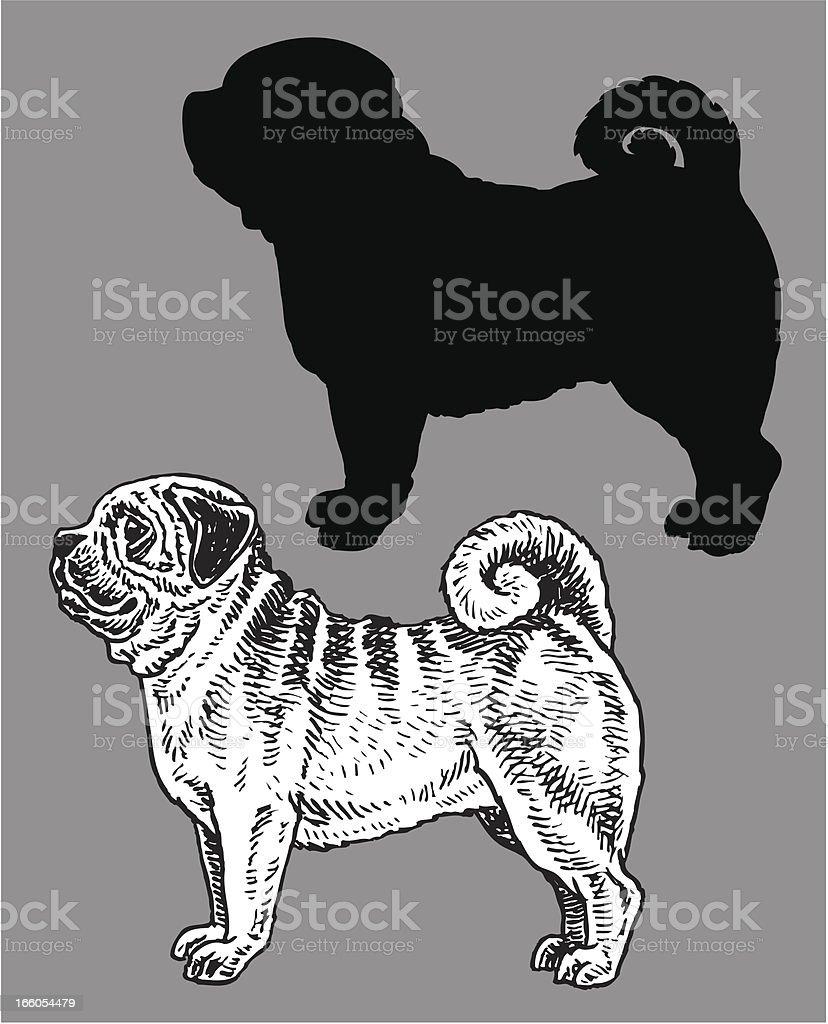 Pug - Dog, domestic pet royalty-free stock vector art