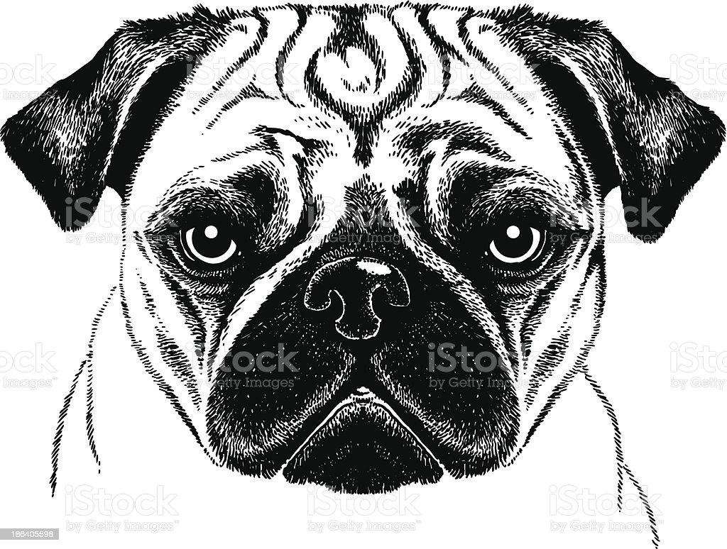 Pug Face royalty-free stock vector art