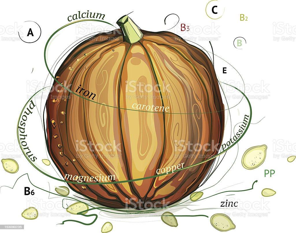 Pumpkin and Seeds Vitamins Illustration royalty-free stock vector art