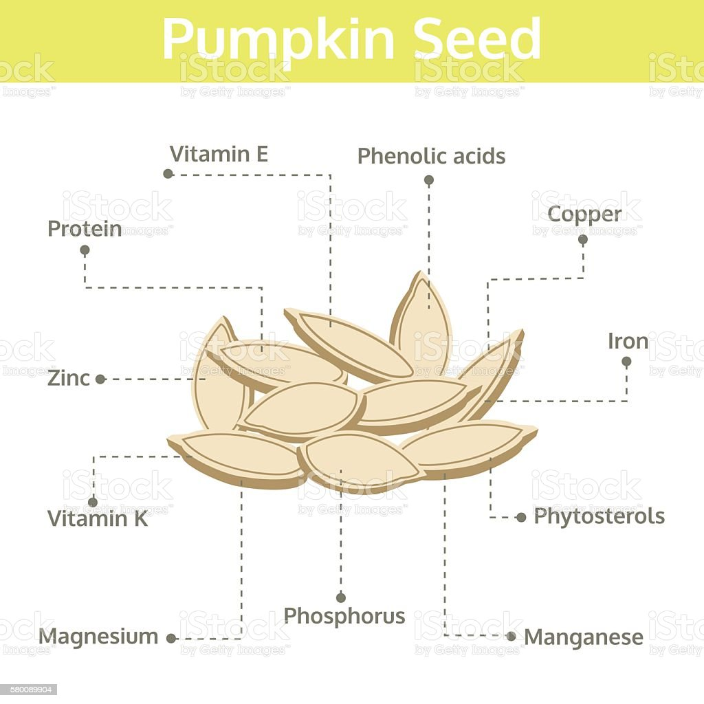 pumpkin seed nutrient of facts and health benefits, info graphic vector art illustration