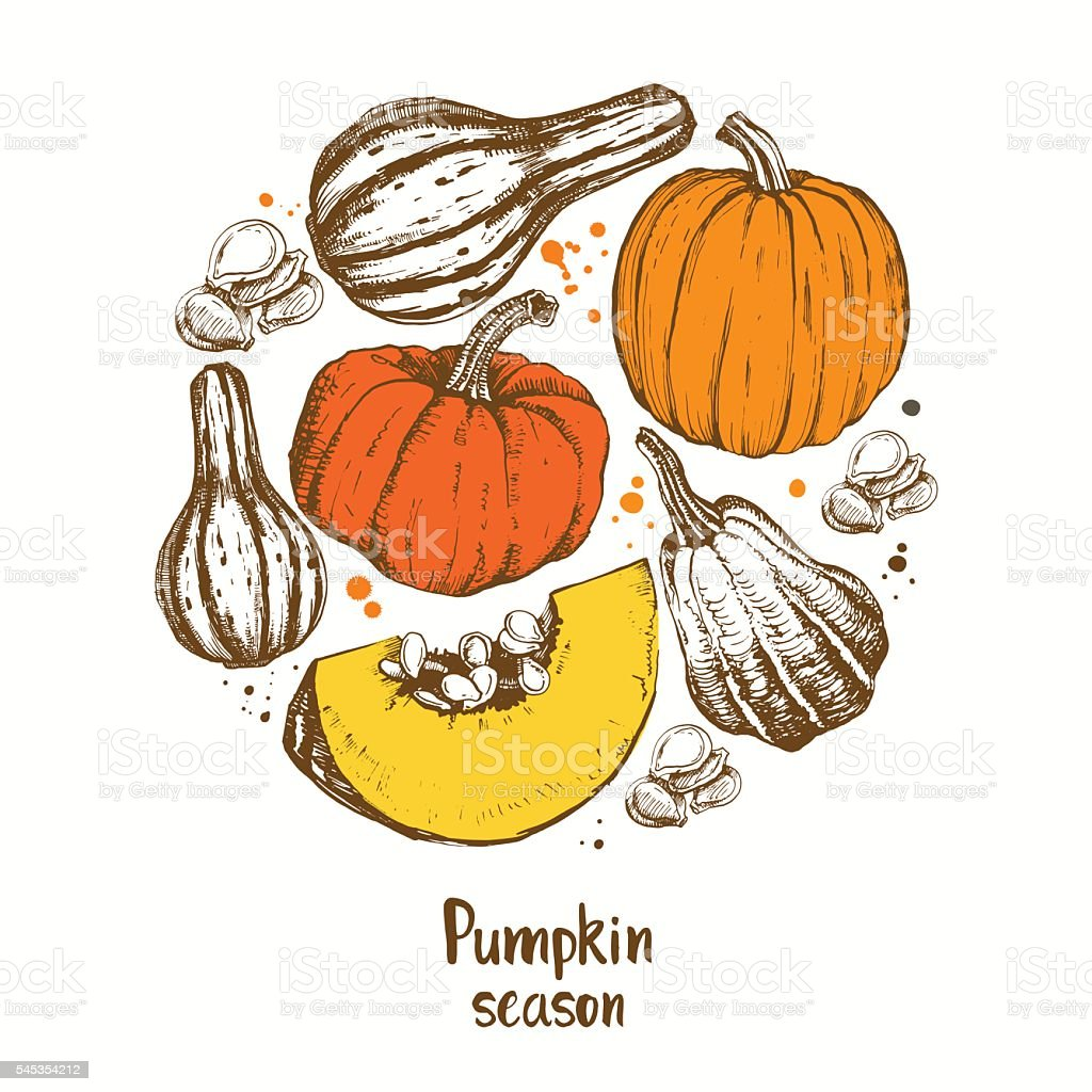 Pumpkin vector. Different varieties of pumpkins. vector art illustration