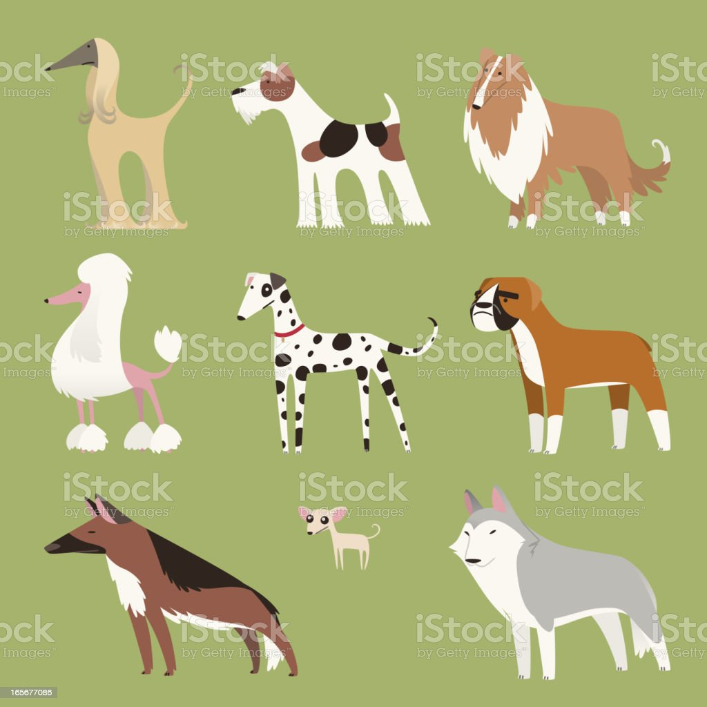 Pure breed dog exhibition canine puppy whelp pet collection vector art illustration