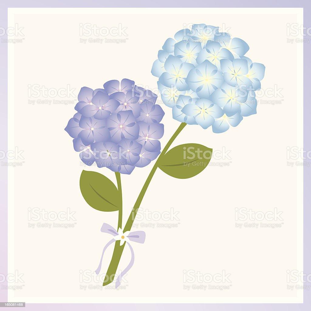 purple and blue hydrangea royalty-free stock vector art