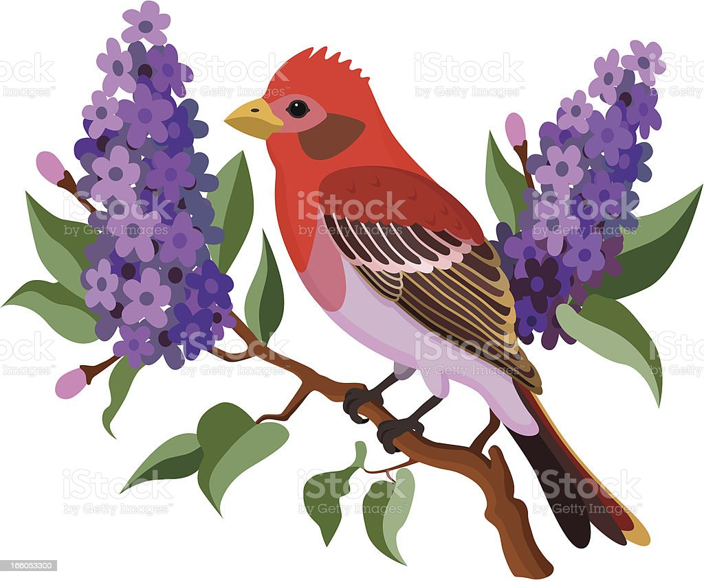 purple finch and lilacs royalty-free stock vector art