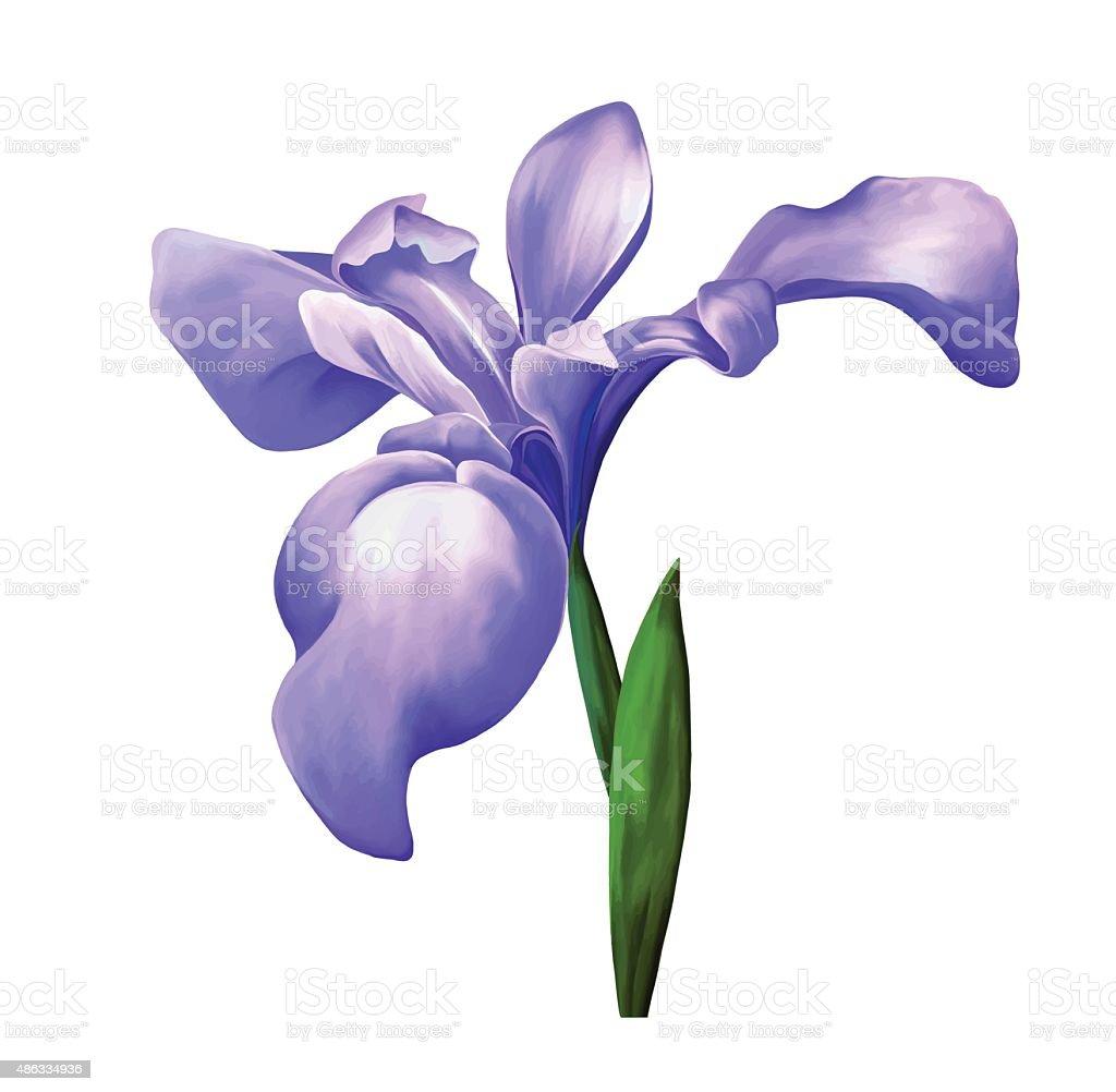 Purple Iris flower. Vector vector art illustration