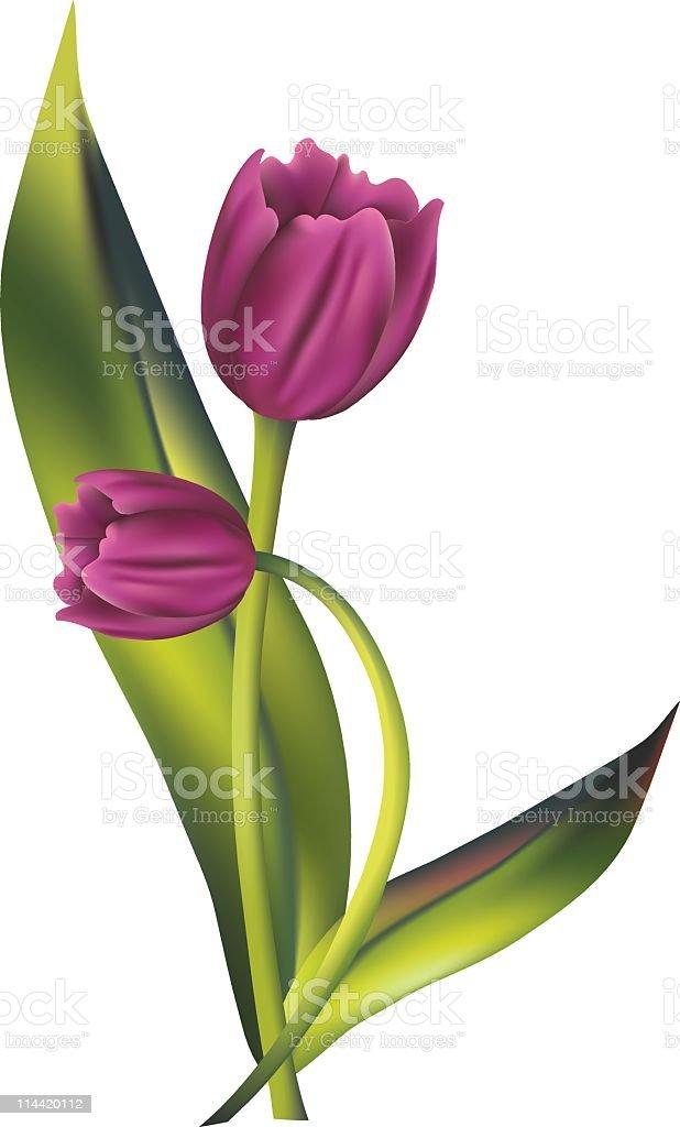 Purple Tulips Spring Flower clipart vector Illustration In Gradient Mesh vector art illustration
