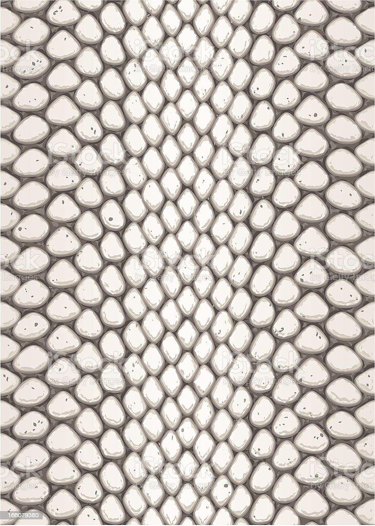 Python skin vector art illustration