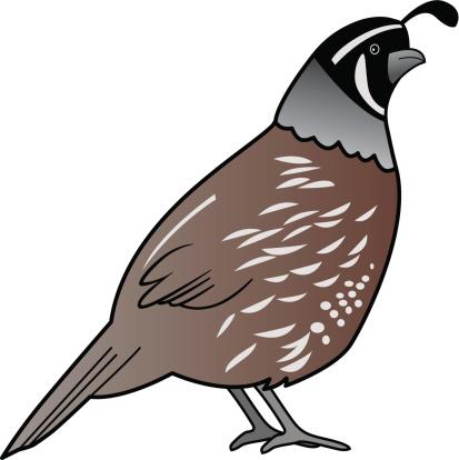 Clip Art Quail Clipart clip art vector images illustrations istock quail illustration