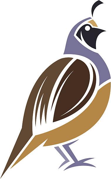 Quail Bird Clip Art, Vector Images & Illustrations - iStock