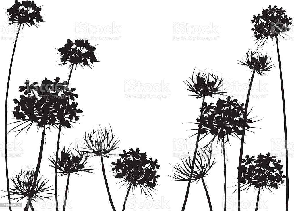 Queen Anne's Lace Flower Horizonal Black silhouette vector art illustration