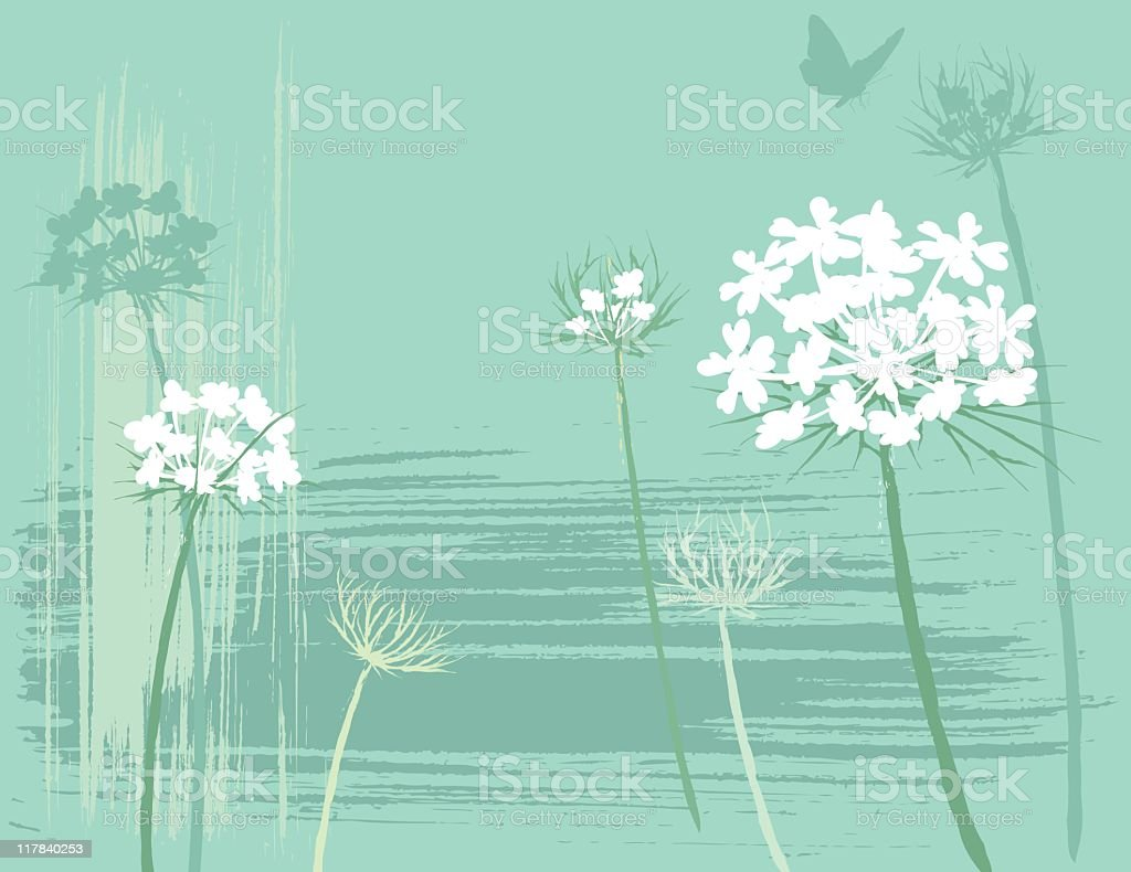 Queen Anne's Lace royalty-free stock vector art