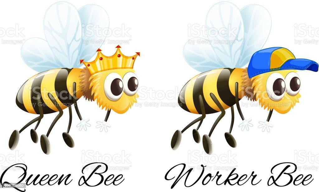 Queen bee and worker bee characters vector art illustration