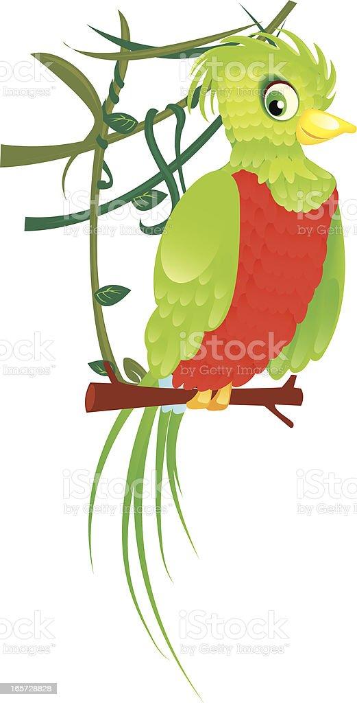 quetzal bird royalty-free stock vector art