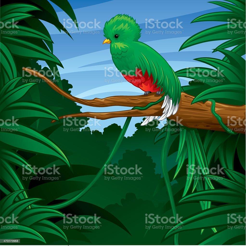 Quetzal in Rainforest royalty-free stock vector art