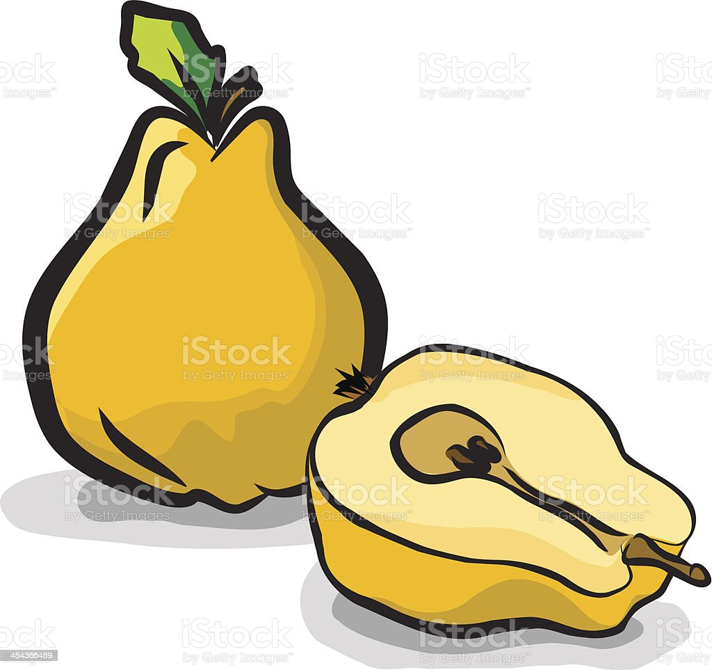Quince fruits drawing vector set royalty-free stock vector art
