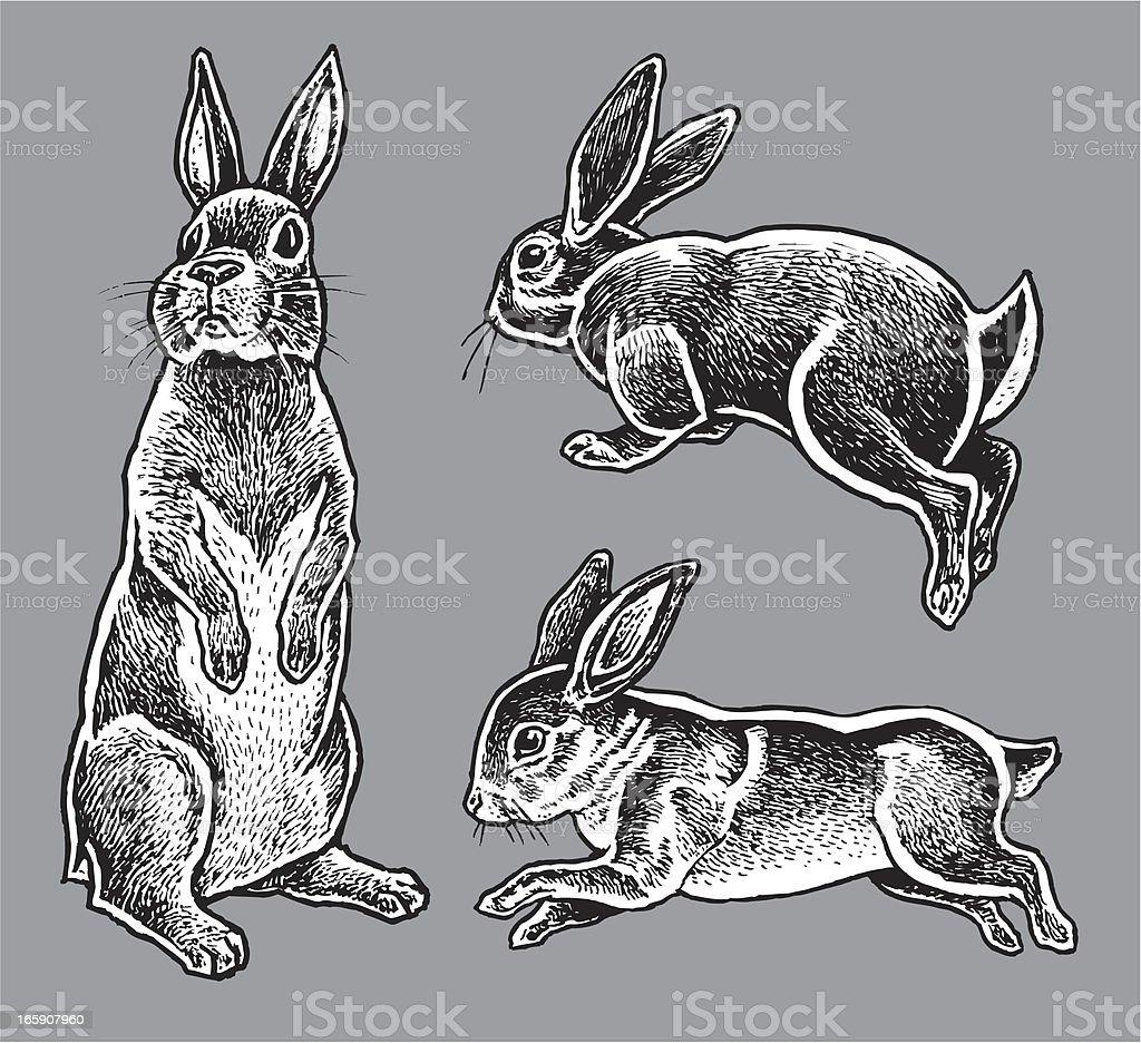 Rabbits - Hare, Bunny royalty-free stock vector art