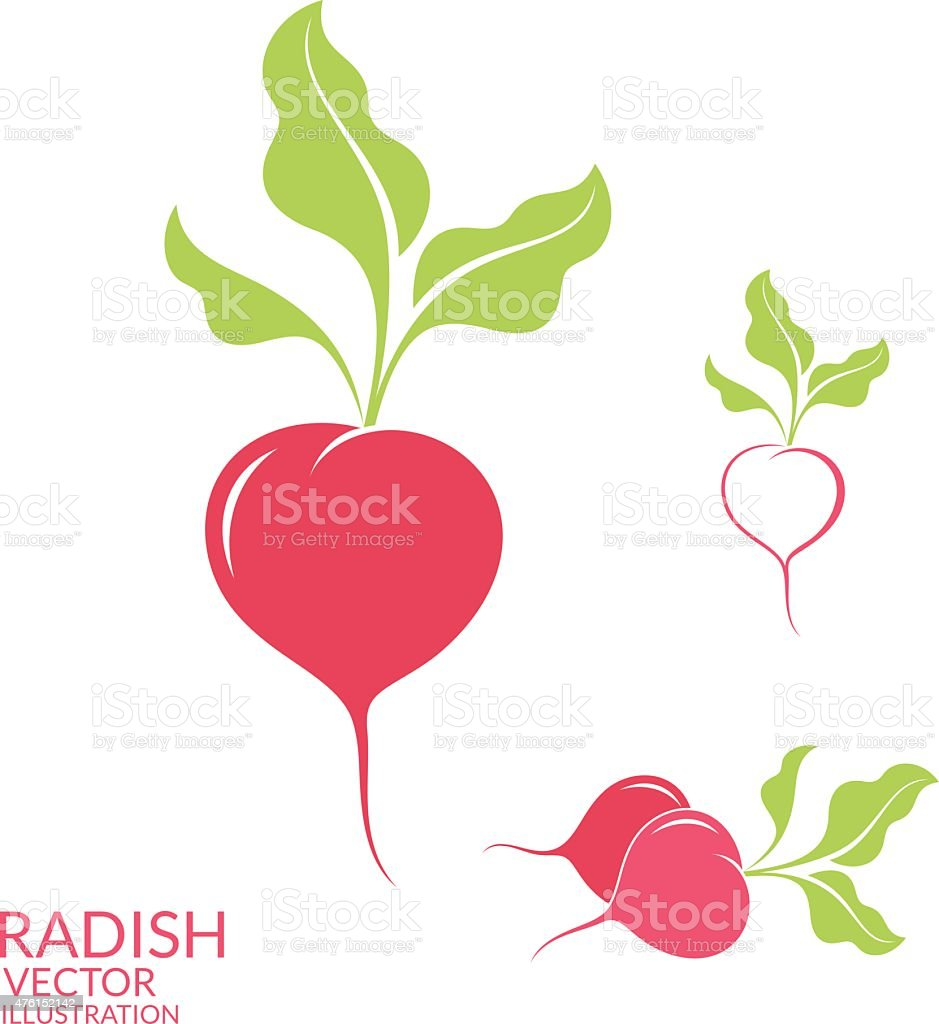 Radish. Set vector art illustration