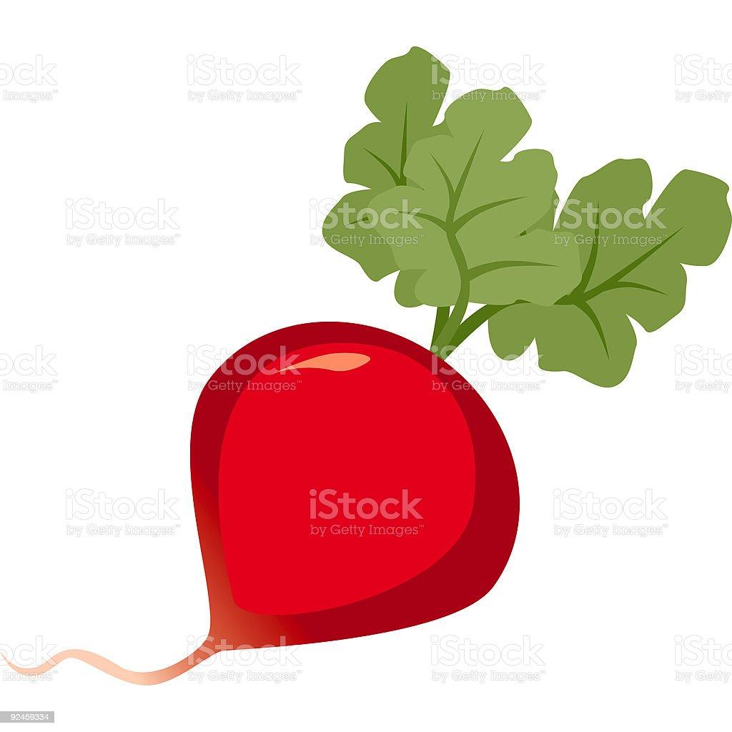 Radish royalty-free stock vector art